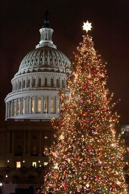 Not a fake tree, but the Christmas tree in Washington DC is just stunning!