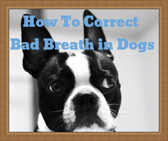 How To Correct Bad Breath in Dogs