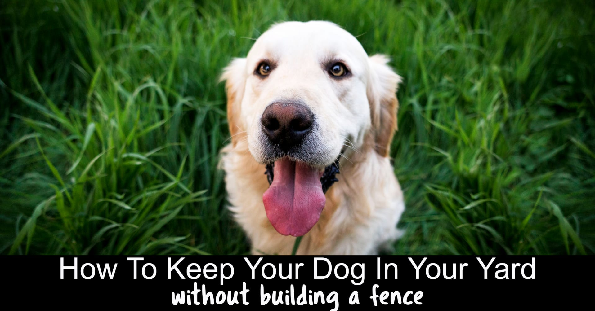Keep do in yard without fence - electric dog fence and wireless dog fence reviews - here's how to keep a dog outside without a fence
